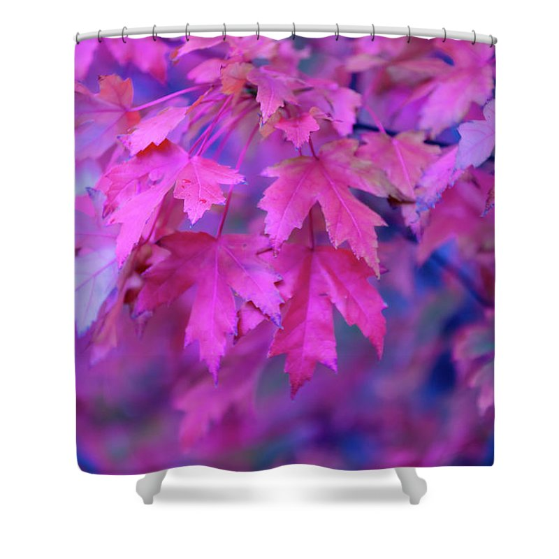 Tranquility Shower Curtain featuring the photograph Full Frame Of Maple Leaves In Pink And by Noelia Ramon - Tellinglife