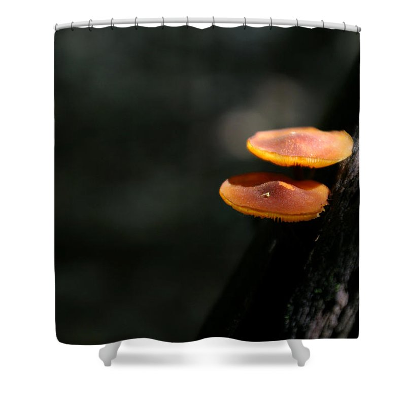 Fungus Shower Curtain featuring the photograph Fungus 5 by Allan Lovell