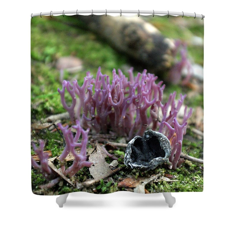 Fungus Shower Curtain featuring the photograph Fungus 6 by Allan Lovell
