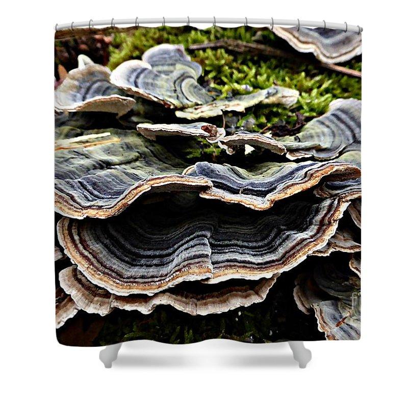 Fungus Shower Curtain featuring the photograph Fungus_1 by Amalia Suruceanu