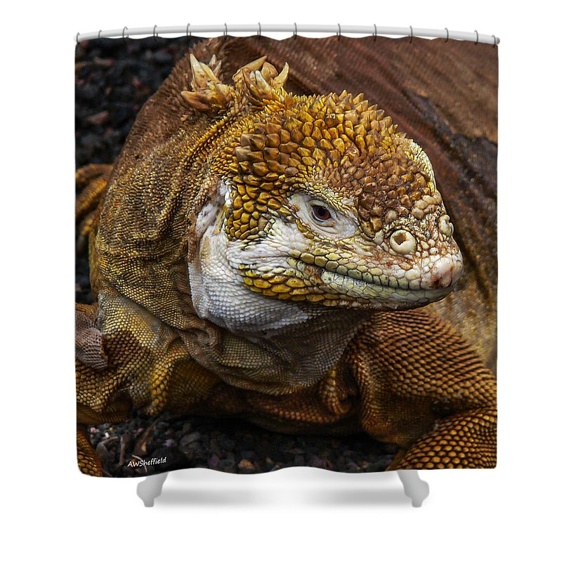 Galapagos Shower Curtain featuring the photograph Galapagos Land Iguana by Allen Sheffield