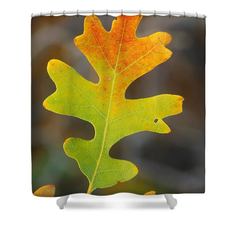 Plant Shower Curtain Featuring The Photograph Gambel Oak Leaf In Autumn By  Rod Planck