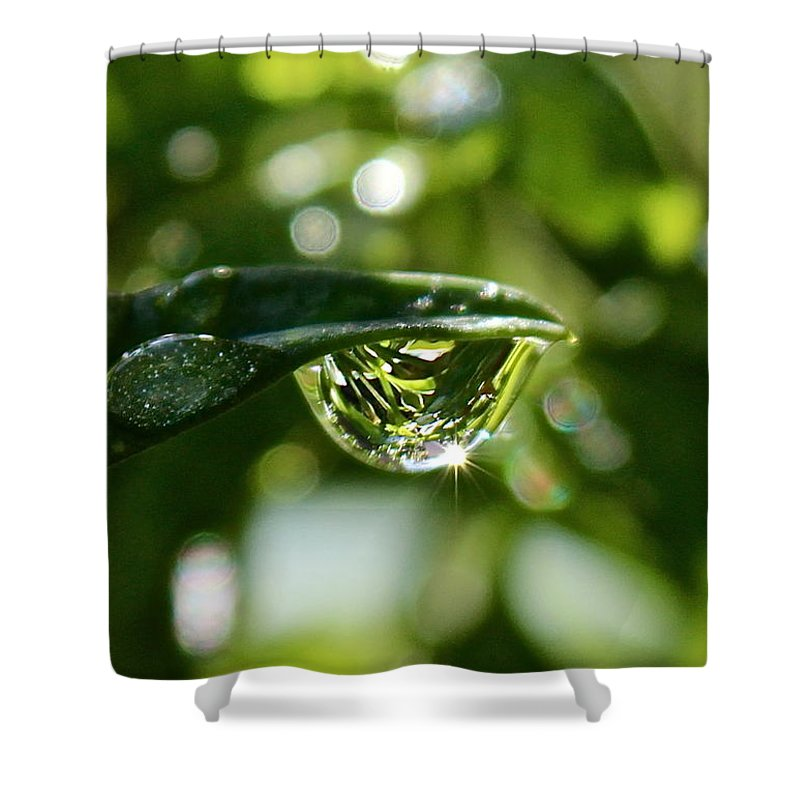 Water Drops Shower Curtain featuring the photograph Garden Reflections by Kume Bryant
