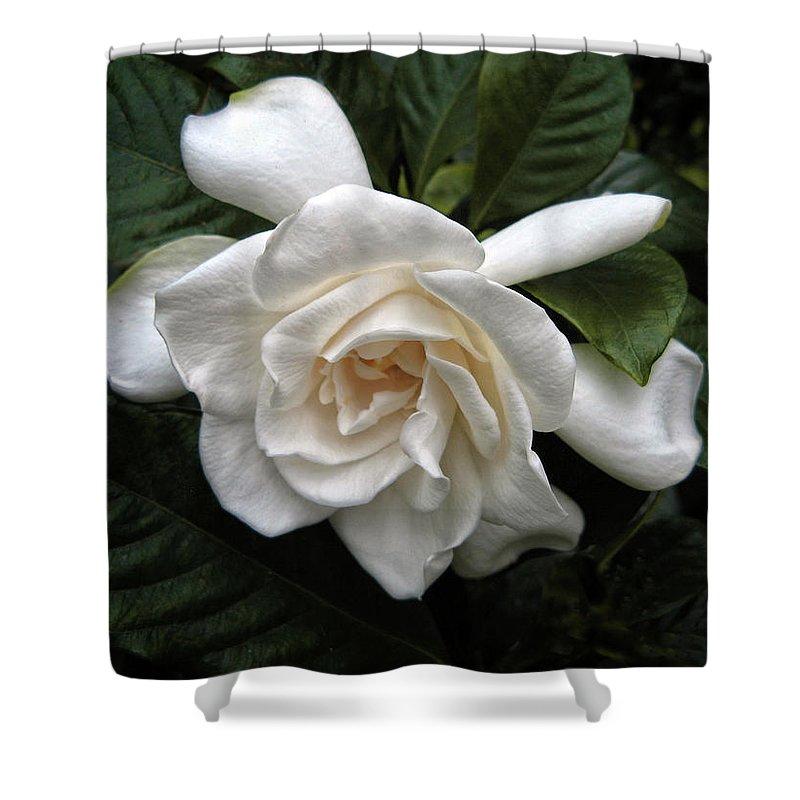 Gardenia Shower Curtains