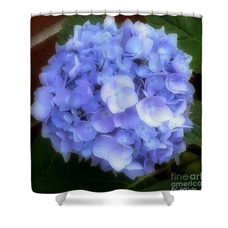 Hydrangea Shower Curtain featuring the photograph Gauzy Blues by RC DeWinter