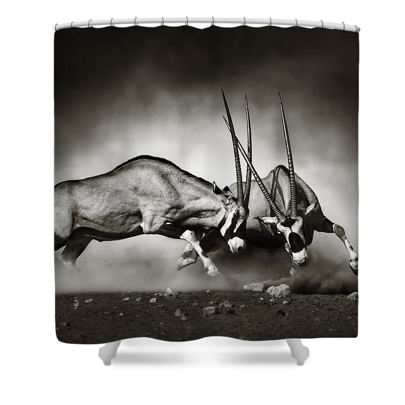 Gemsbok Shower Curtain featuring the photograph Gemsbok Fight by Johan Swanepoel