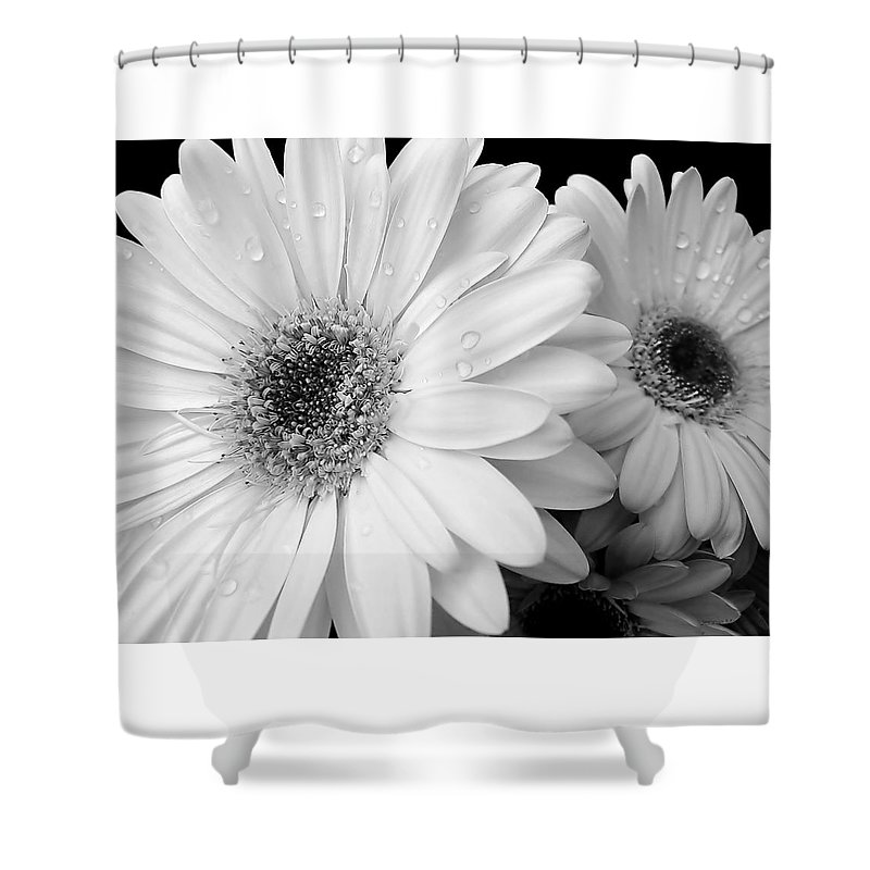 Daisy Shower Curtain featuring the photograph Gerber Daisies In Black And White by Jennie Marie Schell