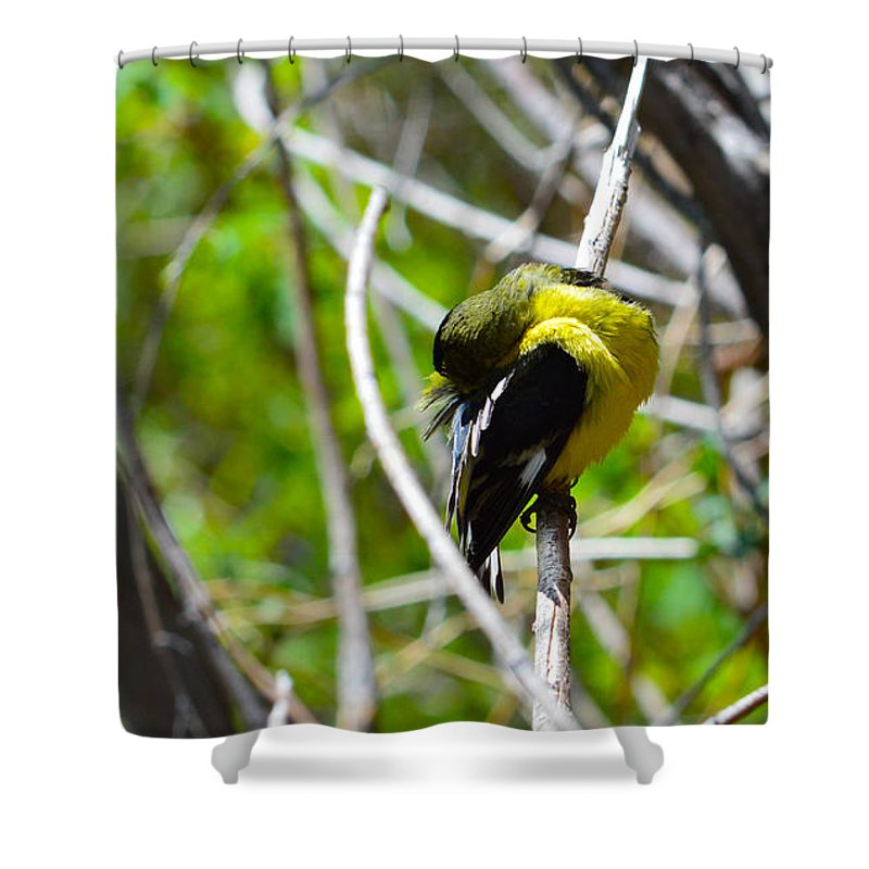 Bird Shower Curtain featuring the photograph Getting Clean by Brent Dolliver
