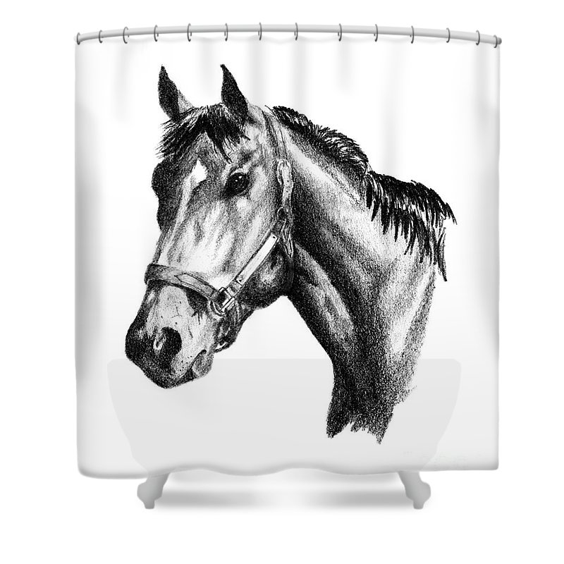 Thoroughbred Shower Curtain featuring the drawing Ghazibella Thoroughbred Racehorse Filly by J M Lister