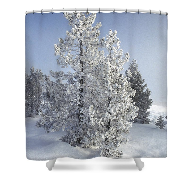 Yellowstone Shower Curtain featuring the photograph Ghost Trees Of Yellowstone by Sandra Bronstein