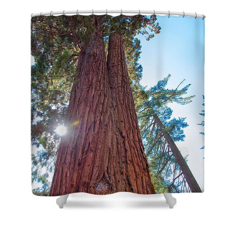 Landscape Shower Curtain featuring the photograph Giant Sequoias by John M Bailey