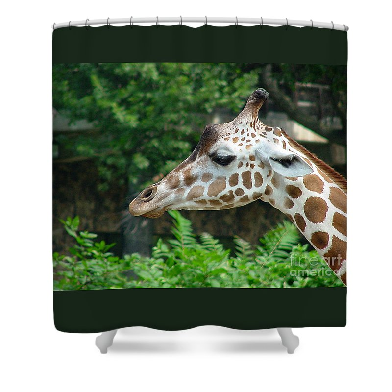 Giraffe Shower Curtain featuring the photograph Giraffe-09028 by Gary Gingrich Galleries
