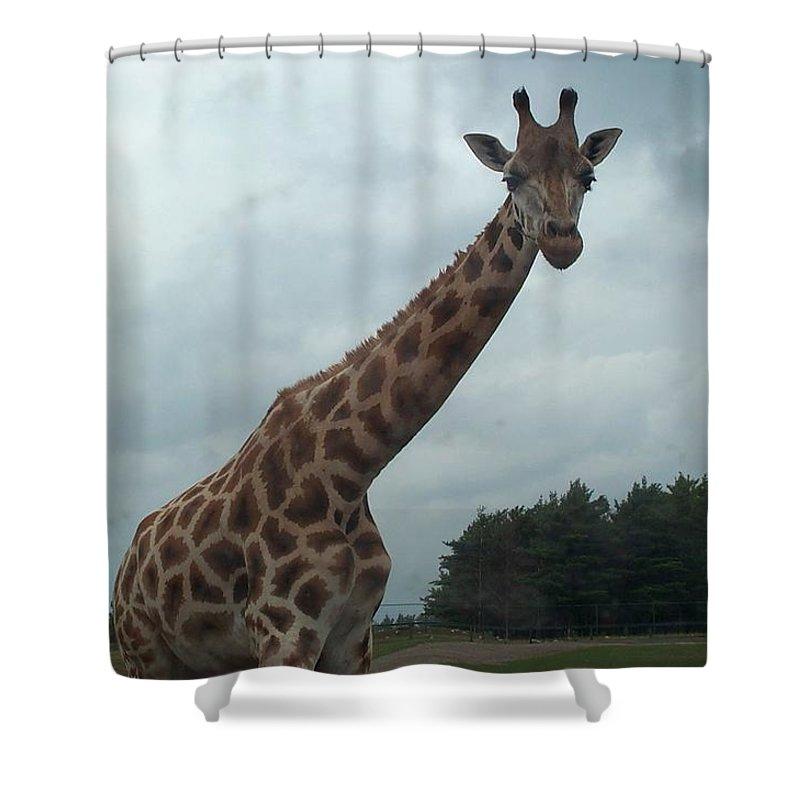 Wildlife Shower Curtain featuring the photograph Giraffe by Barbara McDevitt