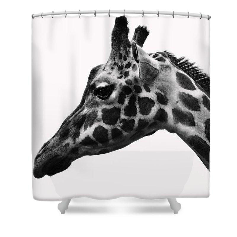 Giraffe Shower Curtain featuring the photograph Giraffe Head Shot by Photos By Cassandra