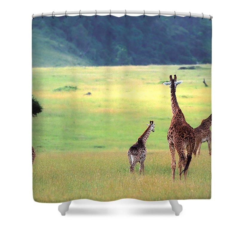Giraffe Shower Curtain featuring the photograph Giraffe by Sebastian Musial