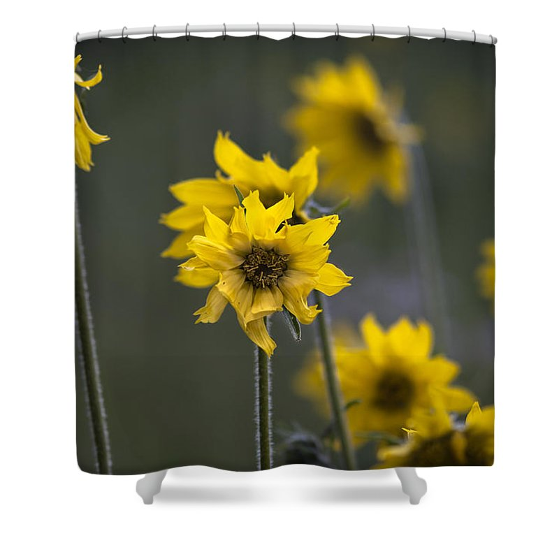 Colorado Shower Curtain featuring the photograph Give Me Sun by Kim Upshaw