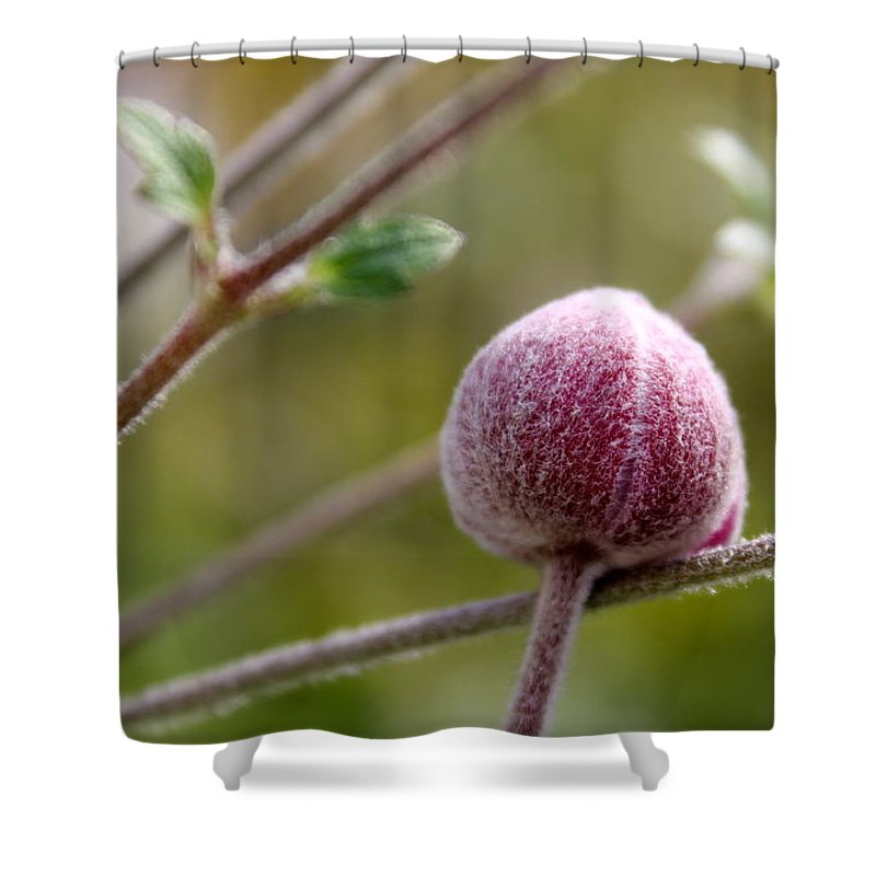Shower Curtain featuring the photograph Globe Flower Bud Before The Bloom by Renee Croushore
