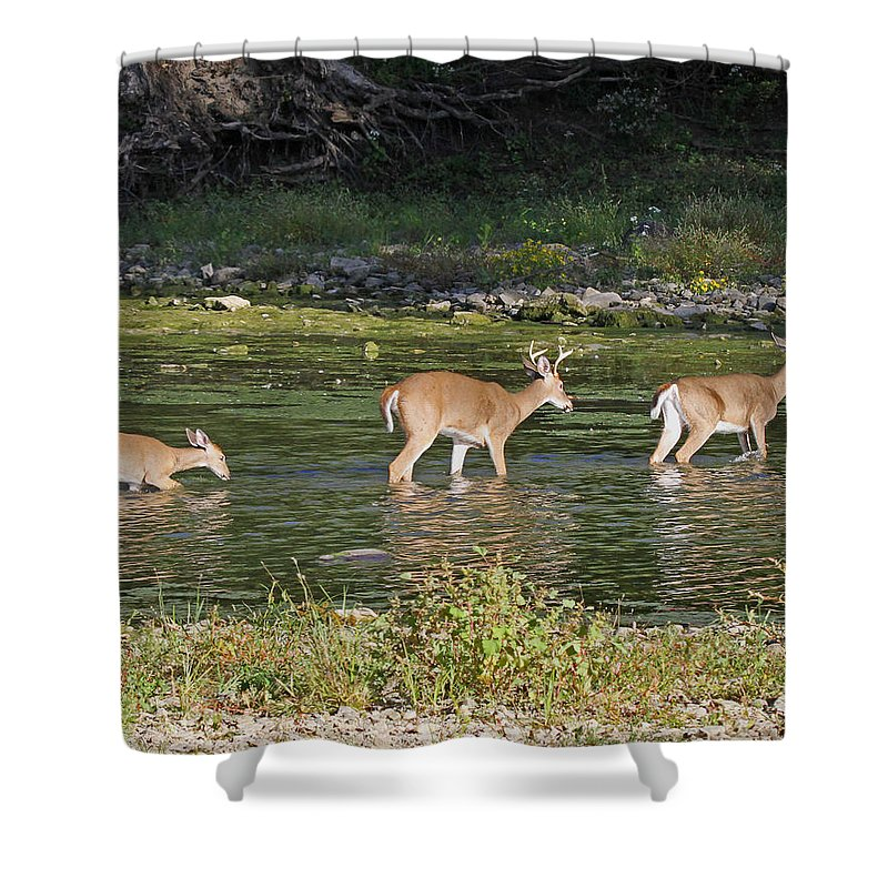 Deer Shower Curtain featuring the photograph Going Home by Mike Dickie