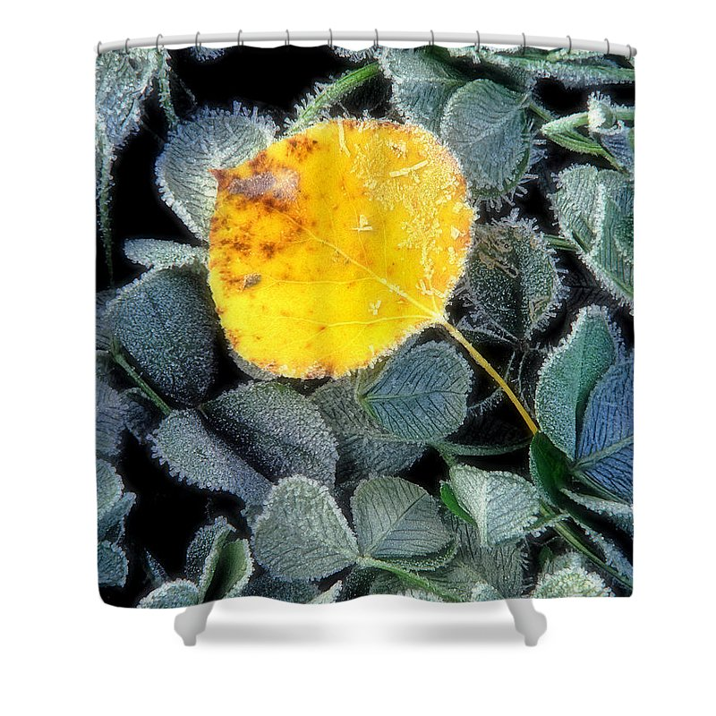 First Frost Shower Curtain featuring the photograph Gold On Green by Bill Morgenstern