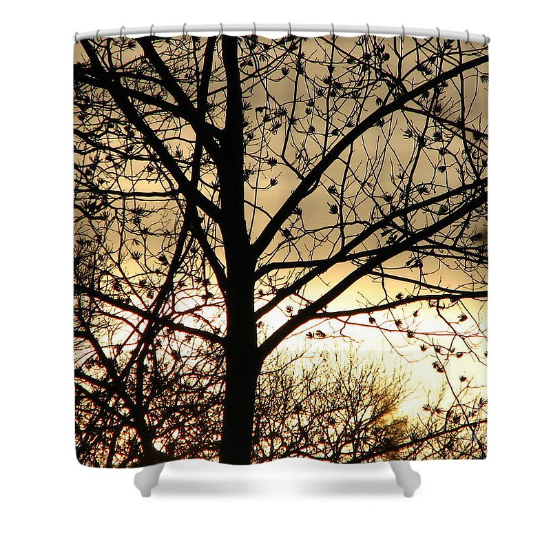 Trees Shower Curtain featuring the photograph Gold Sunset by Roxy Riou