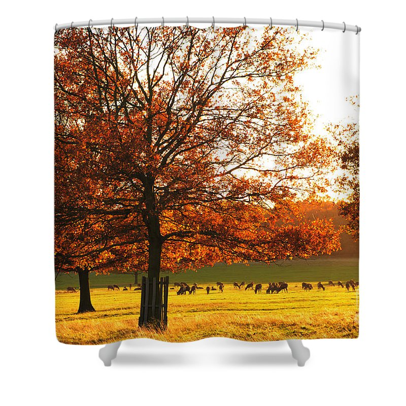 richmon-upon-thames Shower Curtain featuring the photograph Golden Autumn by Lana Enderle