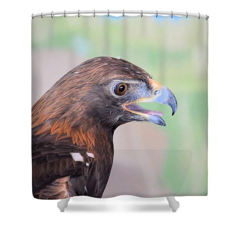 Eagle Shower Curtain featuring the photograph Golden Eagle 7595 by Bonfire Photography