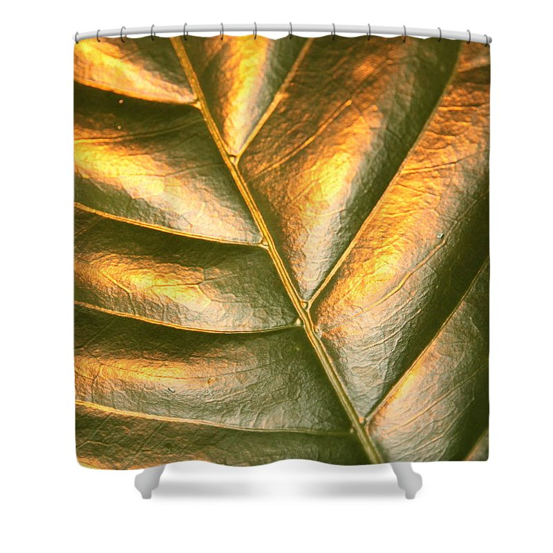 Gold Shower Curtain featuring the photograph Golden Leaf 2 by Carol Groenen