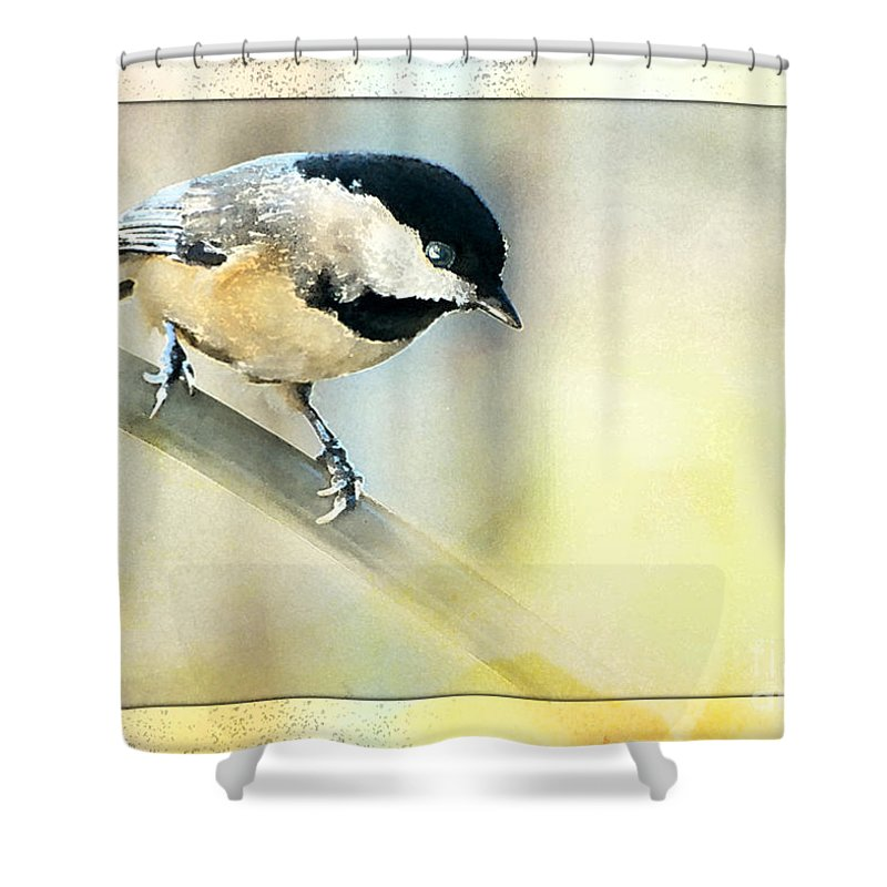 Nature Shower Curtain featuring the photograph Golden Morning Chickadee Photo Art by Debbie Portwood