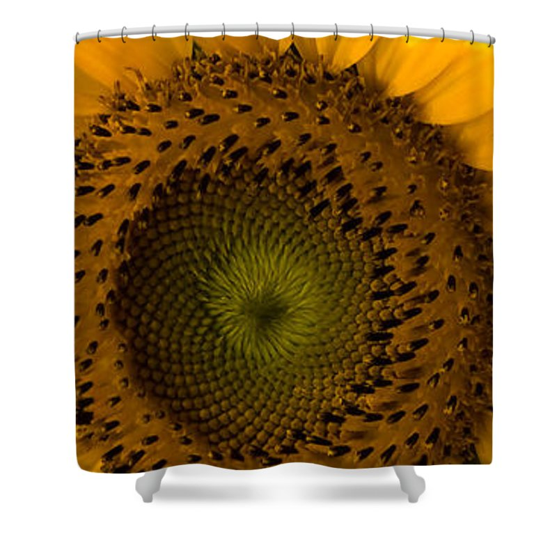 Flower Shower Curtain featuring the photograph Golden Petals by Ed Gleichman
