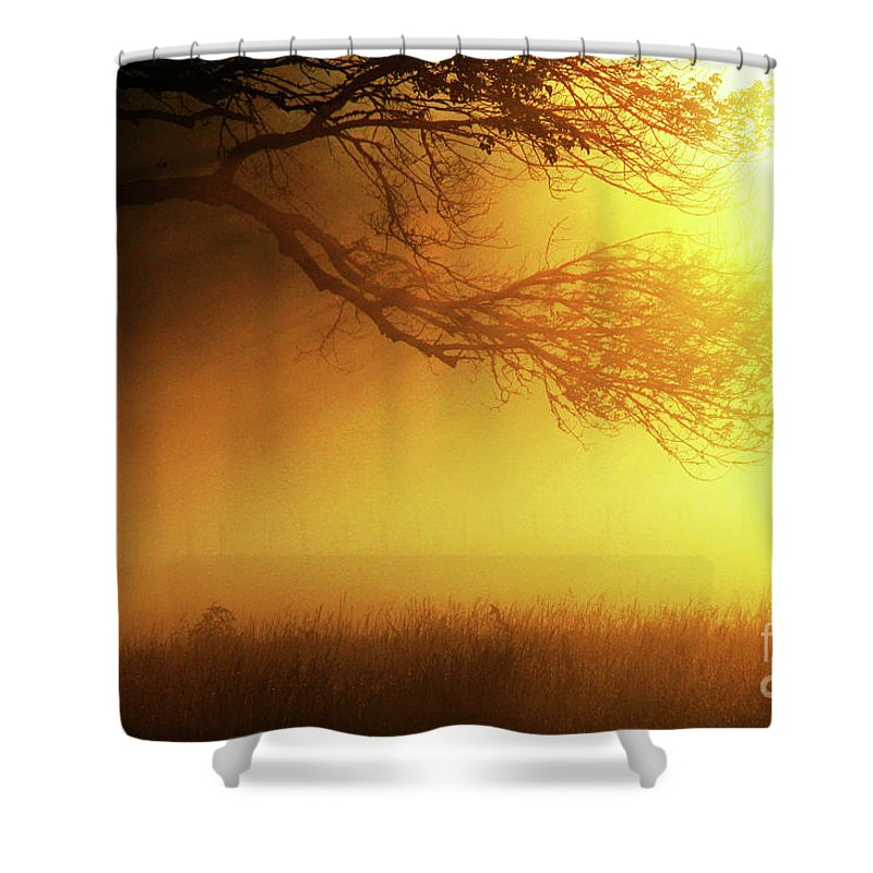 Tree Shower Curtain featuring the photograph Golden Rays by Douglas Stucky