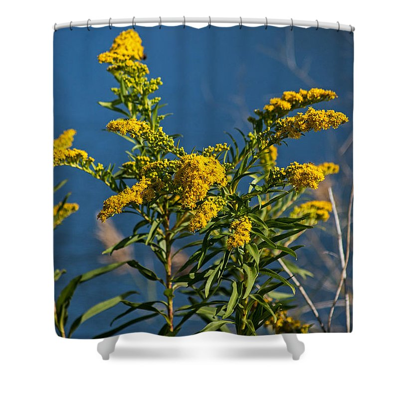 Golden Rods Shower Curtain featuring the photograph Golden Rods At Northside Park by Bill Swartwout Fine Art Photography