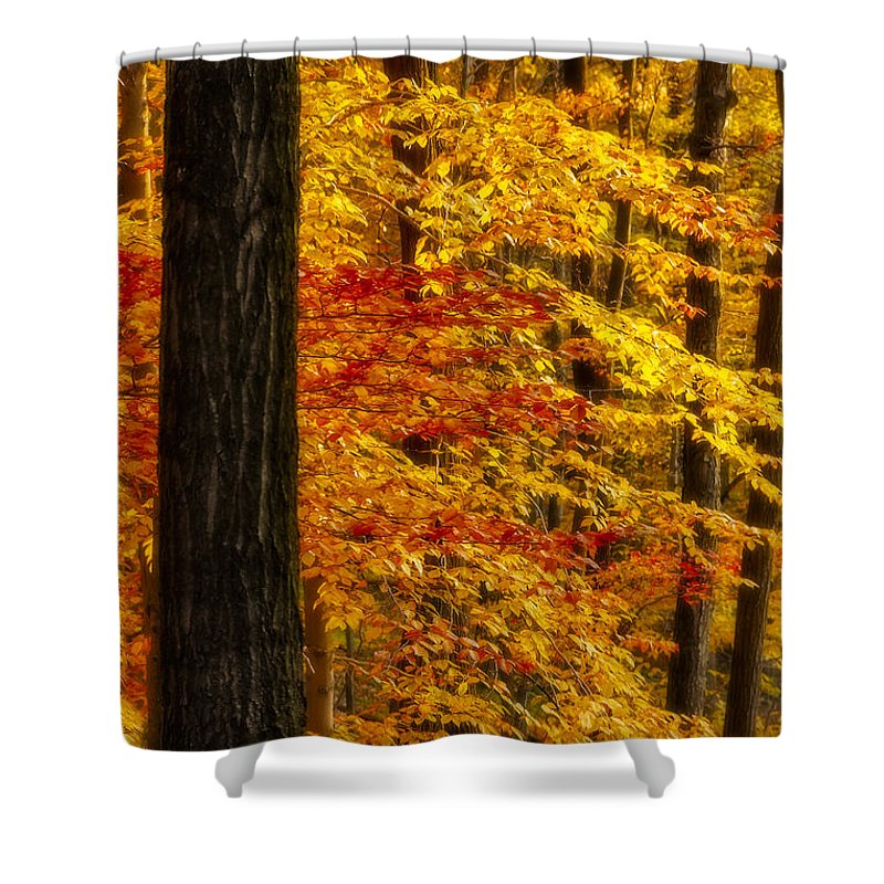Autumn Shower Curtain featuring the photograph Golden Trees Glowing by Susan Candelario