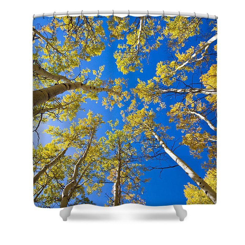 Snow Shower Curtain featuring the photograph Golden View Looking Up by James BO Insogna