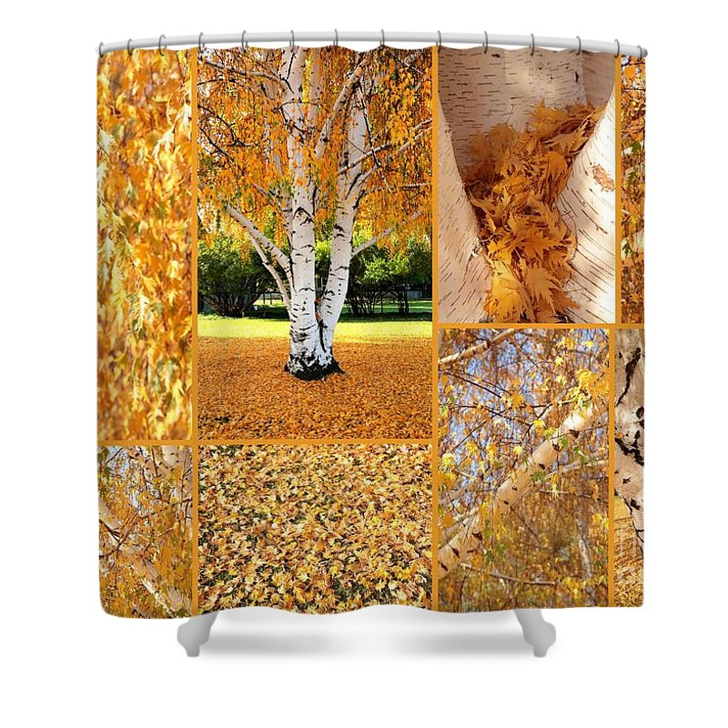 Weeping Birch Tree Shower Curtain Featuring The Photograph Golden Weeping Birch  Tree Collage By Carol Groenen