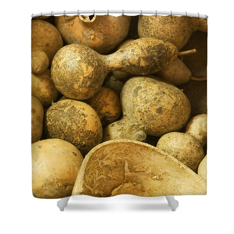 Gourd Shower Curtain featuring the photograph Gourds by Bob Pardue
