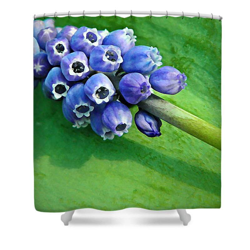 Muscari Shower Curtain featuring the photograph Grape Hyacinth Spike by Chris Berry