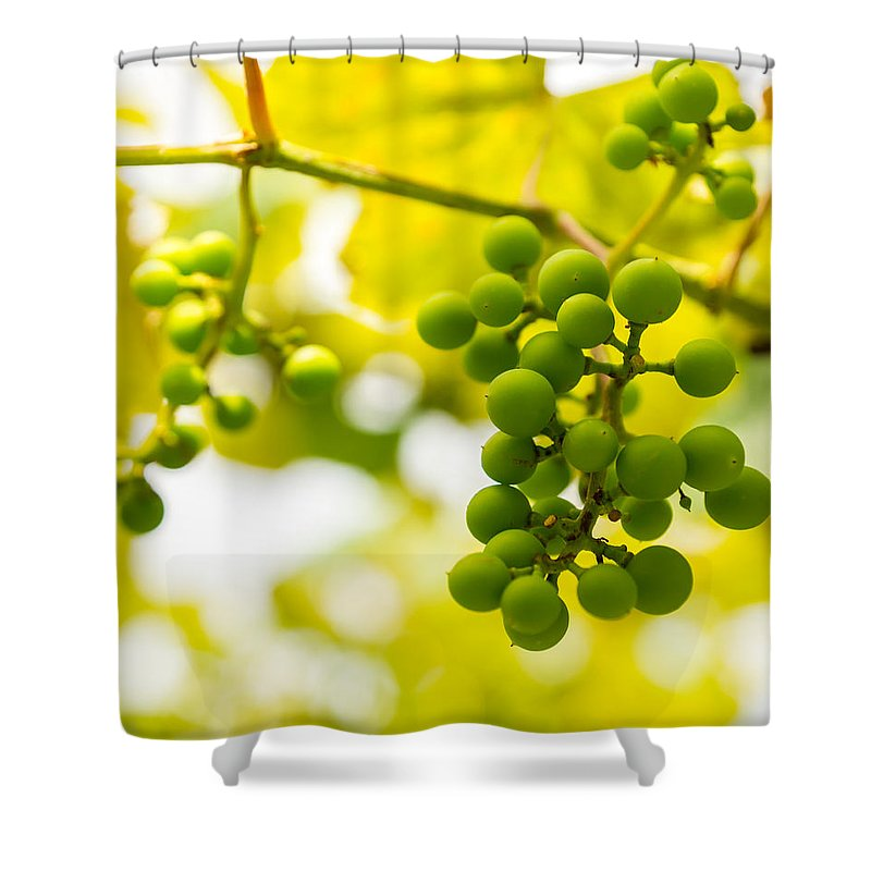 Grape Shower Curtain featuring the photograph Grapes On The Vine - Finger Lakes Vineyard by Photographic Arts And Design Studio