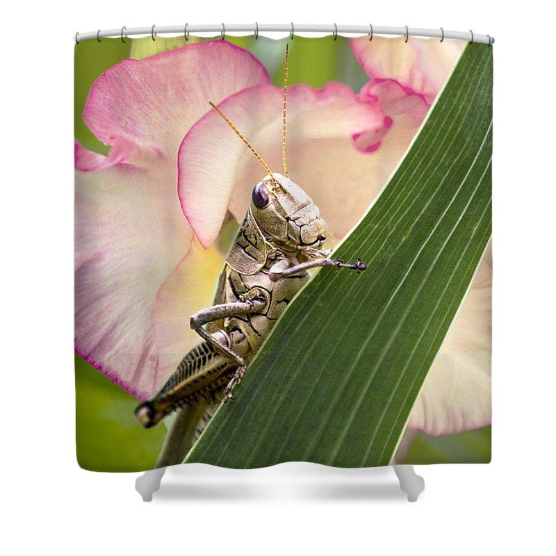 Grasshopper Shower Curtain featuring the photograph Grasshopper by Marina Kojukhova