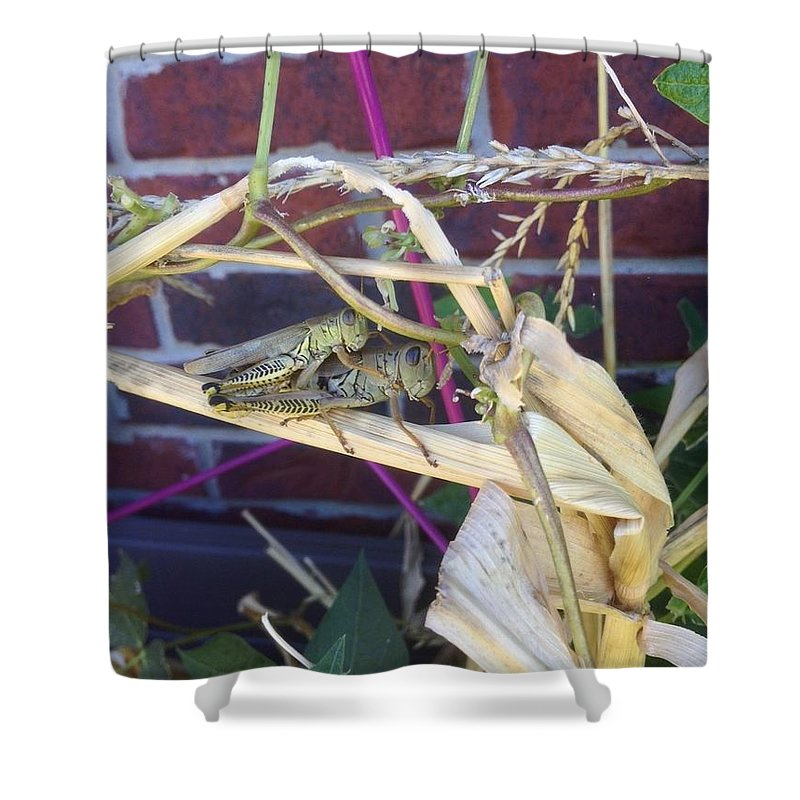Piggyback Grasshoppers In The Garden On A Fall Day Shower Curtain featuring the photograph Grasshopper Piggyback by Lorraine Coughlin