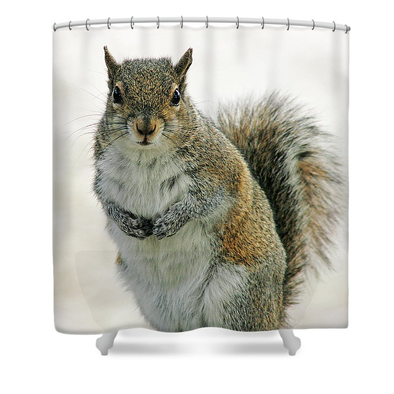 Nature Shower Curtain featuring the photograph Gray Squirrel by Cindi Ressler