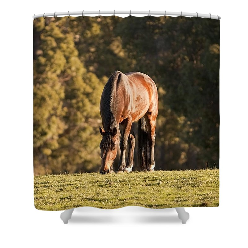 Horse Shower Curtain featuring the photograph Grazing Horse At Sunset by Michelle Wrighton