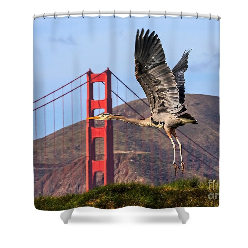 Kate Brown Shower Curtain featuring the photograph Great Blue At The Golden Gate by Kate Brown