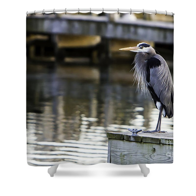 Heron Shower Curtain featuring the photograph Great Blue Heron by Brad Marzolf Photography