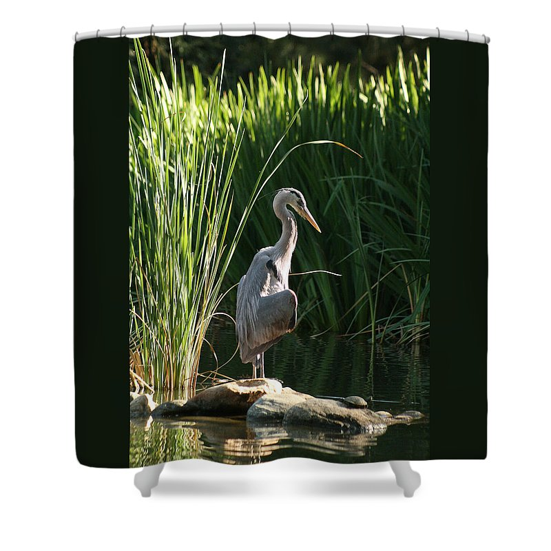 Great Blue Heron Shower Curtain featuring the photograph Great Blue Heron by Ellen Henneke