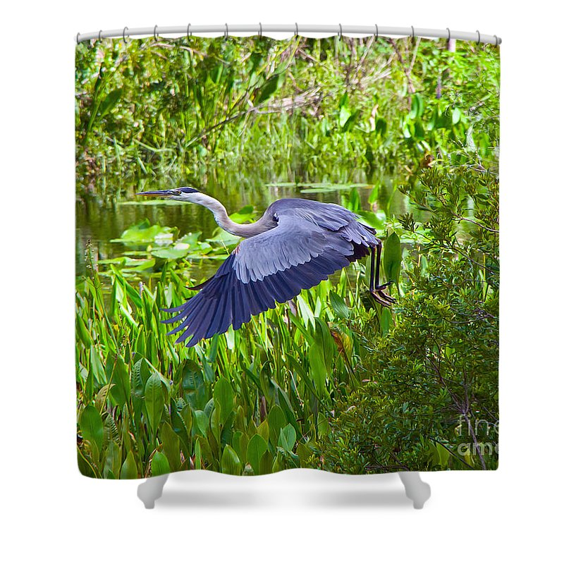Florida Shower Curtain featuring the photograph Great Blue Heron by Stephen Whalen