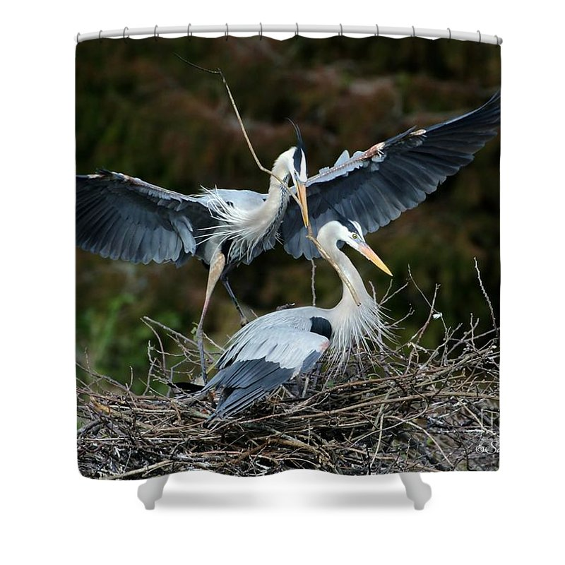 Heron Shower Curtain featuring the photograph Great Blue Herons Nesting by Sabrina L Ryan