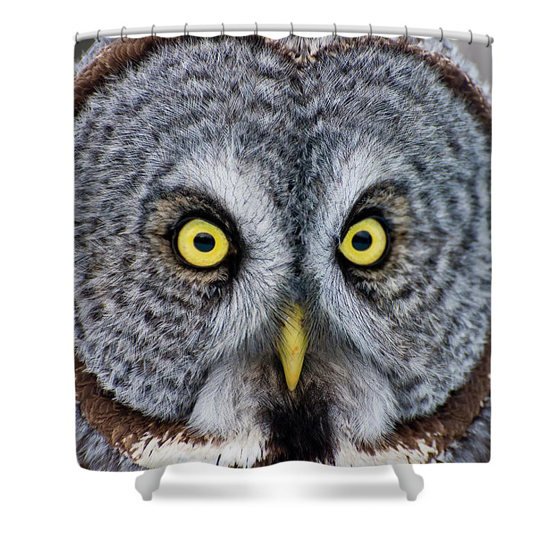 Animal Themes Shower Curtain featuring the photograph Great Gray Owl by Copyright Michael Cummings