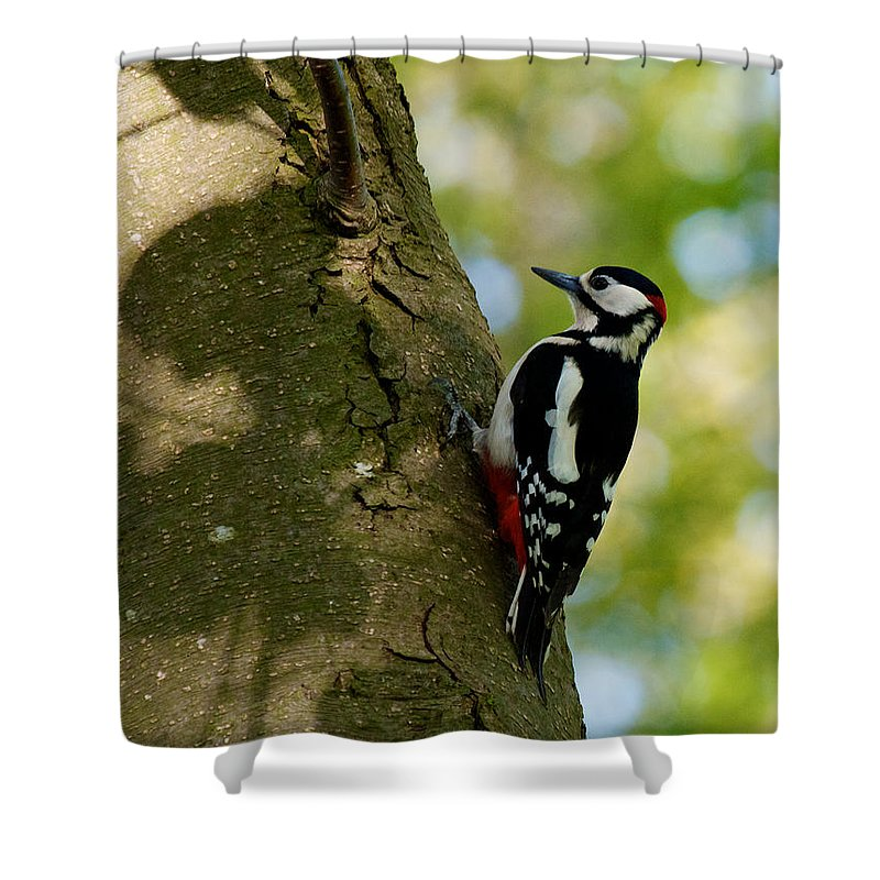 Holland Shower Curtain featuring the photograph Great Spotted Woodpecker by David Beebe