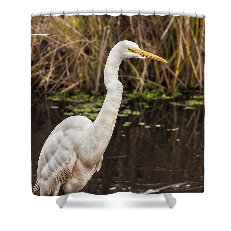 Nature Shower Curtain featuring the photograph Great White Egret by Kathleen Bishop