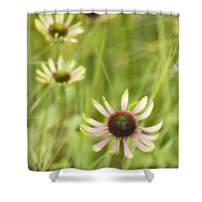 Green Envy Shower Curtain featuring the photograph Green Envy by Anne Gilbert